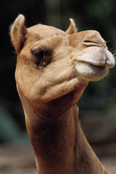 brand expertise can eliminate ending up with a camel