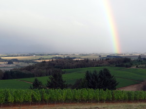 Marketing strategy and vineyard views
