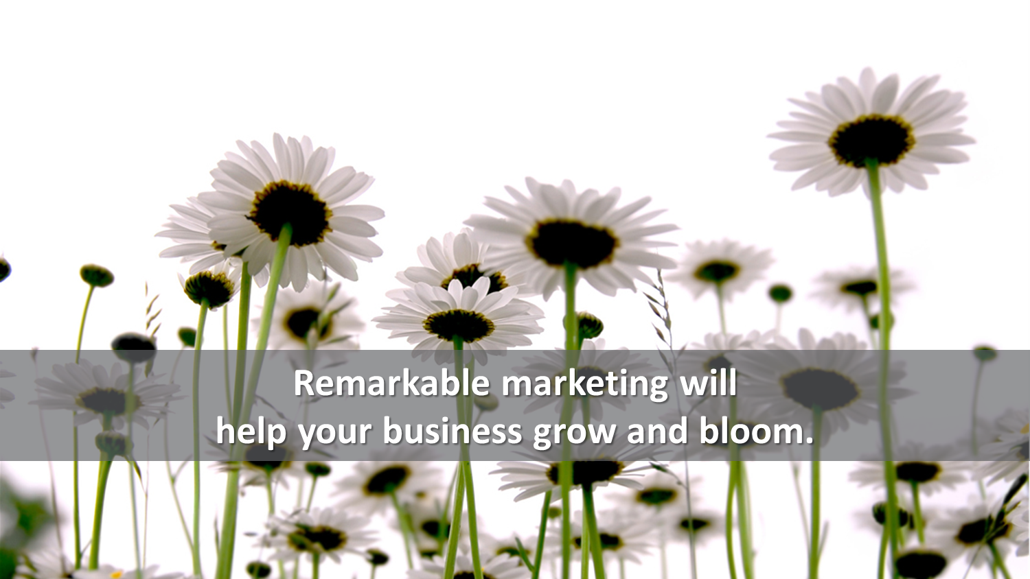 marketing strategies to grow your business